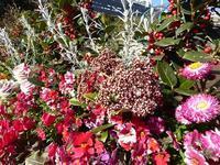 池袋西武デパートで屋上庭園の花々と回し寿司活美登利♪池袋って面白い♪ - ルソイの半バックパッカー旅