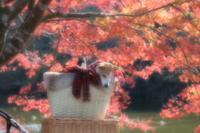 紅色がお似合い - aya's photo