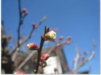 梅は咲いたか - CISCO-NooDLE