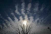空の景色 - たなぼた