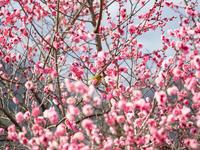 2月2日種松山 - 風まかせ、カメラまかせ