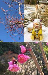 春よこいこい~!! - 水鏡 mizukagami