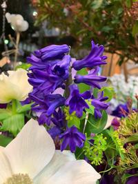 ゴメンネの花は【ヒヤシンス】 - ルーシュの花仕事