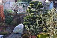 昨日の庭仕事 - refresh-3