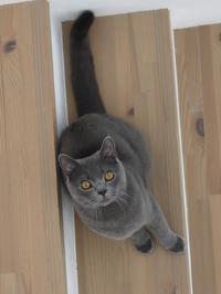 猫のお留守番 おぶくん編。 - ゆきねこ猫家族