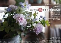 初心者さんも、ベテランさんもきっちり基礎から習いましょ、てことでフォトレッスン藤沢クラス開講。残席3です - 東京女子フォトレッスンサロン『ラ・フォト自由が丘』-写真とフォントとデザインと現像と-