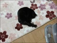 猫センサーも戸惑う - あずきのばあばの、のんびり日記