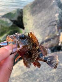 久しぶりぶりの平日釣行 - 広島の〜中学生Seabass angler
