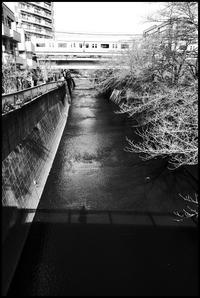 中野-39 - Camellia-shige Gallery 2