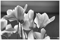 花びら - BobのCamera