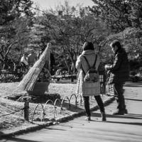 牡丹を撮る人 - え~えふ写真館
