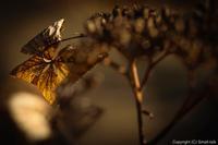 ほうじ茶色の、冬景色 - ひつじ雲日記