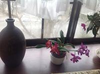 ブンブン姫、11時より出勤 - カピパラと日本蜜蜂