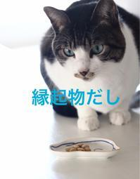 にゃんこ劇場「豆は食わねど」 - ゆきなそう  猫とガーデニングの日記