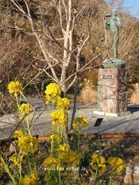 牧野植物園の菜の花♪ - アリスのトリップ