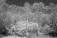 モノクロ風景妙高高原笹ヶ峰キャンプ場2 - 光 塗人 の デジタル フォト グラフィック アート (DIGITAL PHOTOGRAPHIC ARTWORKS)
