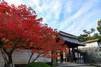 京の紅葉2018一休寺・参道の彩り - 花景色-K.W.C. PhotoBlog