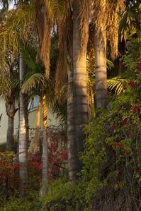 宗教とAAミーティング - ハリウッドの丘から/折原恵のロサンゼルス通信  Kei Orihara blog