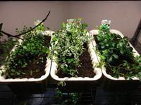 植物「植え替え」 - 孤影悄然