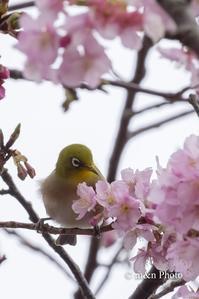 立春 - 季節のおくりもの