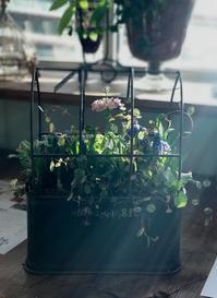 ガーデン&クラフツ 2月寄せ植え教室 2日目 - 小さな庭 2