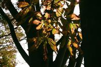 秋色の葉 - Amana Films