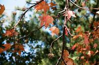 秋の葉② - Amana Films