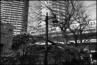 中野-40 - Camellia-shige Gallery 2