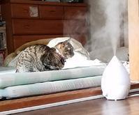 加湿器のそばで - キジトラ猫のトラちゃんダイアリー