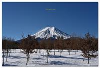 富士散策公園の富士山 - toru photo box