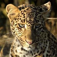 サバンナの野生動物たち、そしてお知らせ - 旅プラスの日記