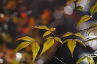 光あふれて - 風の彩り-2