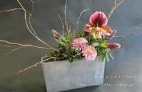 先週の定期装花からトリフォリューム・ルペンス - Impression Days