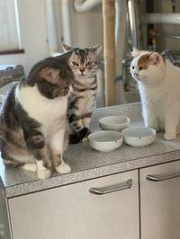 猫談義 - 土筆の庭