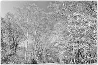 モノクロ風景妙高高原笹ヶ峰キャンプ場3 - 光 塗人 の デジタル フォト グラフィック アート (DIGITAL PHOTOGRAPHIC ARTWORKS)