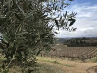キャンティ地方、ブドウ2月上旬の生育日記2019 - フィレンツェのガイド なぎさの便り