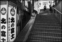 中野-41 - Camellia-shige Gallery 2