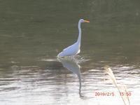立春の川面風景変化 - 家の周りの季節感