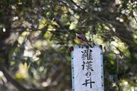 2018年に出会った鳥さんたち@里見公園 - Buono Buono!