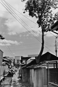 家から伸びる木 - 空を見上げて
