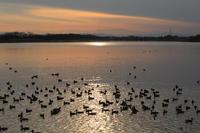 降り注ぐ湖面の光 - 風の彩り-2