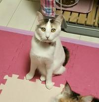 回復のやかまし部屋 - ゆきももこの猫夢日記