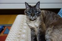 こんなに変わる猫の顔 - 夢風 御朱印日記