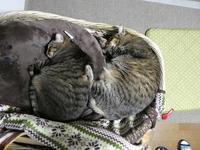 シンクロ寝 - ねこっかぶりねこ2