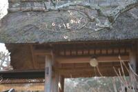北鎌倉東慶寺二月初めの花 - 木洩れ日 青葉 photo散歩