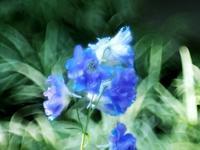 花ちょう館の高山植物たち3 - 光の音色を聞きながら Ⅳ