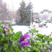 雪 - パリ花時間