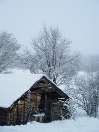 白銀の世界と - ベルギーの田舎