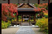 京の紅葉2018梨木神社・紅葉と萩の紅葉 - 花景色-K.W.C. PhotoBlog