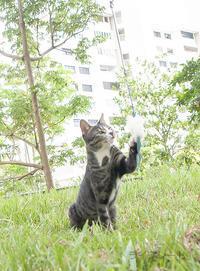 ご近所猫 2019.02.05 - Rayblade Photos